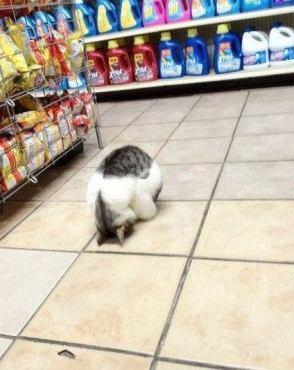catshop
