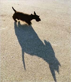 dogshadow